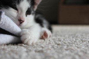 carpet-cleaning-service-sumner
