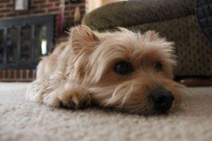 rug-cleaning-sumner